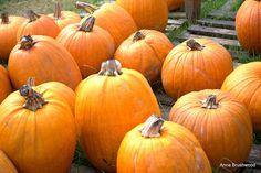 Fun with pumpkins...