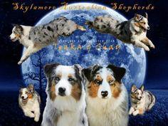 Design by Shannen Jacoby for Skylamere Australian Shepherds ♡