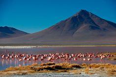 Reserva Nacional de Fauna Eduardo Avaroa - Bolivia