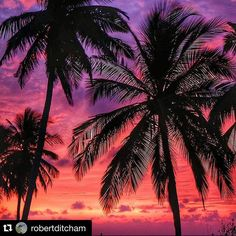 Colours of the Horizon at Day Break - Captured through coconut tree leaves. Photo by @robertditcham Repost with #stockphotolk Sign up on www.stockphoto.lk and convert your creativity into revenue! .  Bye Sri Lanka until next season. Thanks to @blushingcatt @desmidty @tobetuco @willyatesphotography and many others.  #srilanka #sunsets #sunset #coconut #palmtree #palm #asia #travelphotography #travel #adventure #beach #clouds #silhouette #beachlife #kitesurfing #kalpitiya.  #travelgram…