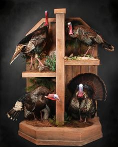 Not usually into bird taxidermy, but this is kinda cool
