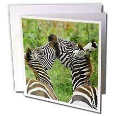 Kike Calvo Animals - Common zebra Lake Nakuru Kenya Africa - Greeting Cards-12 Greeting Cards with envelopes by Kike Calvo, http://www.amazon.com/dp/B004KQ0XHK/ref=cm_sw_r_pi_dp_K2ssrb1TR6DFY