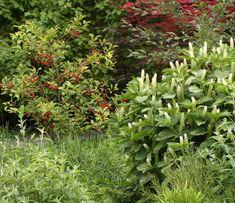 Ovocná zahrada může být krásná i zajímavá - Zahrada Herbs, Garden, Plants, Garten, Lawn And Garden, Herb, Gardens, Plant, Gardening