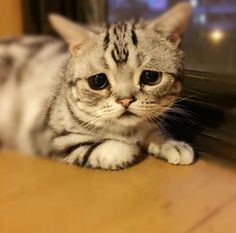 悲しげな顔の猫、ネット上で大人気! 励ましの声続出
