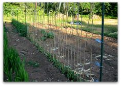 pole bean trellis Whats at Stake: Pole Beans Need Your Support