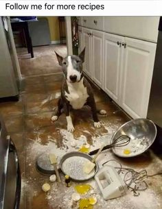23 Truths that Prove English Bull Terriers Come from Another Planet Bull Terriers Anglais, English Bull Terriers, Mini Bull Terriers, Animals And Pets, Funny Animals, Cute Animals, I Love Dogs, Cute Dogs, Terrier Dogs