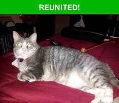 Great news! Happy to report that Boca Benny has been reunited and is now home safe and sound! :)
