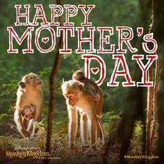Monkey hugs for moms everywhere! Monkey Kingdom, Disney Movies Anywhere, Happy Mothers Day, Hugs, Earth, Random, Nature, Movie Posters, Animals