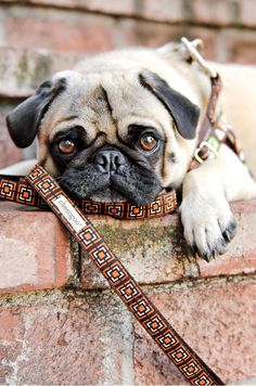 this is puglet.  you should read his blog.