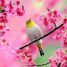 .pretty bird in pretty pink flowers