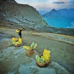 This is a follow up to my previous photo of the blue fire of Mt Ijen. These miners load near 100kg of solidified #sulfur onto their backs and make the strenuous #trek up and down to the crater day and night. This has to be one of the most physically challenging jobs on the planet! They enter the #crater with only handkerchiefs to protect them from the toxic gases coming from the #volcanic vents where the blue fire is visible at night. During the day the solid sulfur is an intense #yellow…