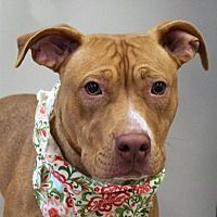 Pin On Adoption Help A Pet Find A Forever Home