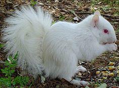 ANIMALES EXTRAÑOS Y CURIOSIDADES ANIMALES: 50 ANIMALES ALBINOS
