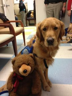 k9 comfort dogs pics | Love in a Fur Suit / Lutheran Church Charities K9 Comfort Dogs at the ...