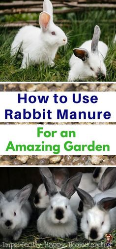 How To Urban Garden How to Use Rabbit Manure For an Amazing Garden. - Rabbit poop fertilizer can truly change a garden. I have 5 ways you can make those droppings into something amazing for your garden. Meat Rabbits, Raising Rabbits, Organic Vegetables, Growing Vegetables, Vegetables For Rabbits, Vegetables Garden, Veggies, Organic Gardening, Gardening Tips