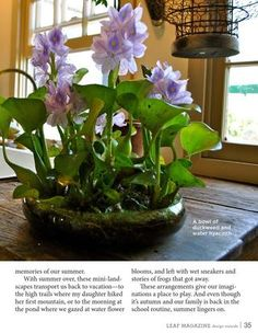 Leaf Magazine Autumn 2012 Water hyacinths and duckweed in a bowl of water inside -- what a cool idea Small Water Gardens, Container Water Gardens, Container Gardening, Beautiful Flowers Garden, Beautiful Gardens, Water Hyacinth, Aquatic Plants, Garden Plants, Water Plants