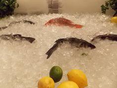 Fresh Catch...