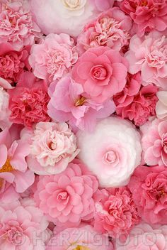 Beautiful Flowers Camellia - Kamelie Need a girly floral iPhone Case cover, check out www.