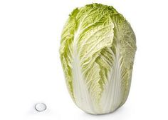 28 weeks Chinese cabbage