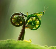 Tustel Ico (Praying Mantis)