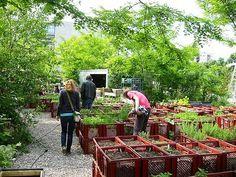 Gardening In The City The Impact of Urban Farming in Berlin and Hong Kong Urban Agriculture, Urban Farming, Eco City, Garden Nursery, Sustainable Food, Vegetable Garden Design, Natural Garden, Outdoor Furniture Sets, Outdoor Decor