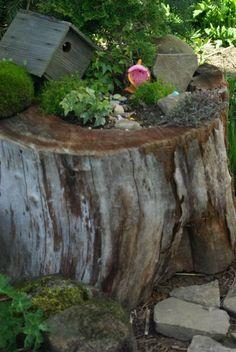 Create a fairy garden from an old stump. fairi hous, fairies, fairi garden, yard, tree stump, outdoor, fairy ideas, gardens, garden time