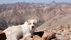 Do you hike with your dog?  They make great hiking partners!