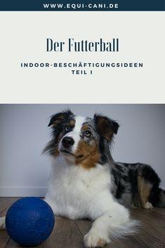 Indoor-Beschäftigungsideen Teil I: Der Futterball