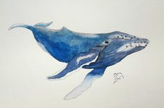 Humpback Whale -- watercolor