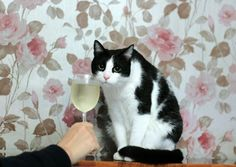 """""""ahh yes a 2007 Pinot from…Napa Valley I believe? A very good year"""""""