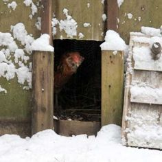 My top six tips on how I take care of our chickens during the winter months.