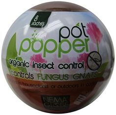 Nema Globe Pot Popper Nematodes Kills Gnats in Potted Plants. One Pot Popper contains product to treat 8 - 8 in. Simply add to the soil and water in. Nema Globe Pot Popper Nematodes should 5 Gallon Plant Pot, Bug Control, Pest Control, Garden Insects, Pest Management, Fungi, Indoor Plants, Potted Plants, Indoor Gardening
