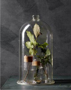 Bell jar or glass domes: The taste of Petrol and Porcelain | Interior design, Vintage Sets and Unique Pieces www.petrolandporcelain.com   johnny miller