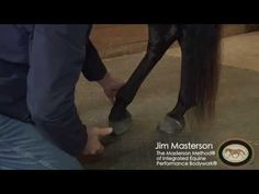Hind Leg Release for the Horse - YouTube