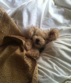 Cozy puppy! hahaha