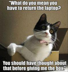 It's True, Cats Are Furry Little McBastards - 18 Pics