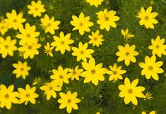 7 Perennial Flowers for Any Climate
