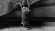 Baby Animal Posts