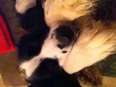 My love puppy <3