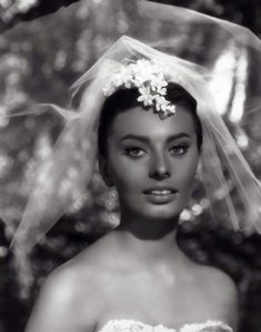 Sophia Loren Sophia Loren Film, Bridget Bardot, Elizabeth Taylor, Overwatch, Stars, Lady, James Dean, Image, Beautiful