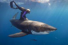 Ocean Ramsey: nuotare con il grande squalo bianco. #oceanramsey #shark #greatwhiteshark #whiteshark #squalobianco