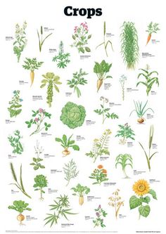 Crops by Guardian Wallchart