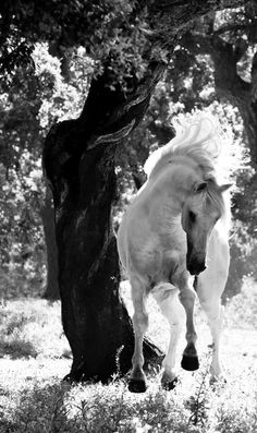 To many, the words love, hope and dreams are synonymous with horses.