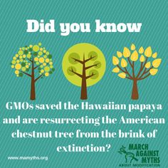 GMOs saved the Hawaiin papaya and are resurrecting the American chestnut tree from the brink of extinction.