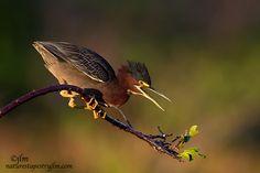 In-Golden-Light !!! | Flickr - Photo Sharing!