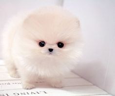 It's so fluffy I could die!!!