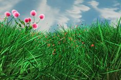 Animating Grass and Flowers Using Paint Effects in Maya