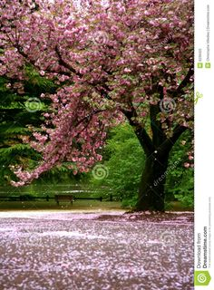 snow scenes photography | Incredible scene - Cherry blossom snow, with green garden and a lake ...