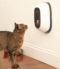 Video Chat And Dispense Treats To Your Pets Remotely. I need this...