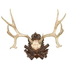 Tracy Porter Antler Plaque
